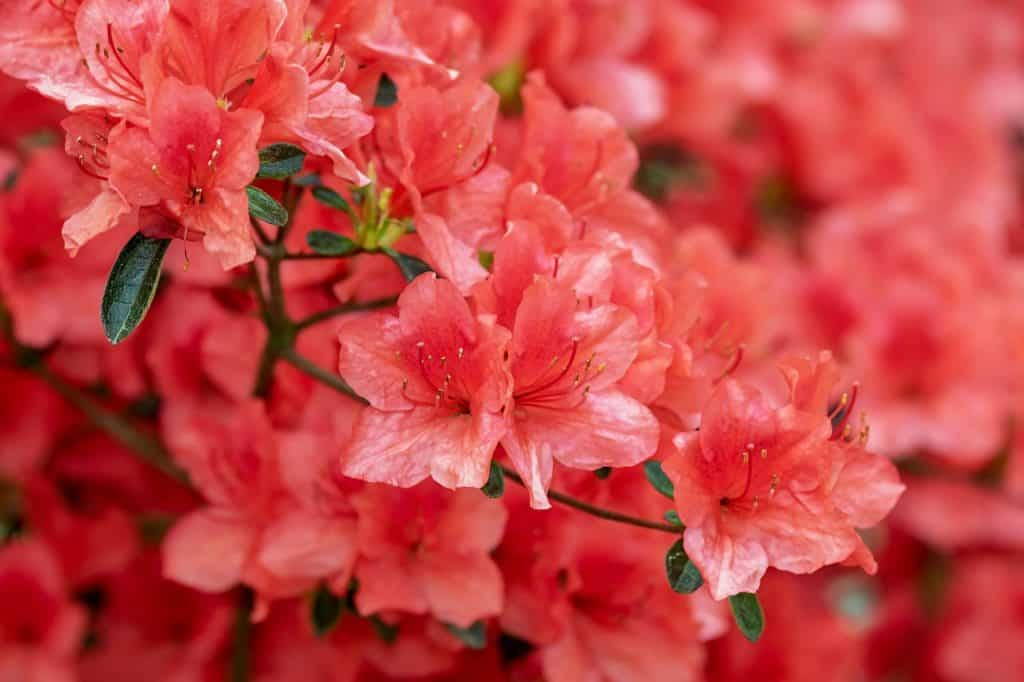 Some Interesting Facts On Shrubs