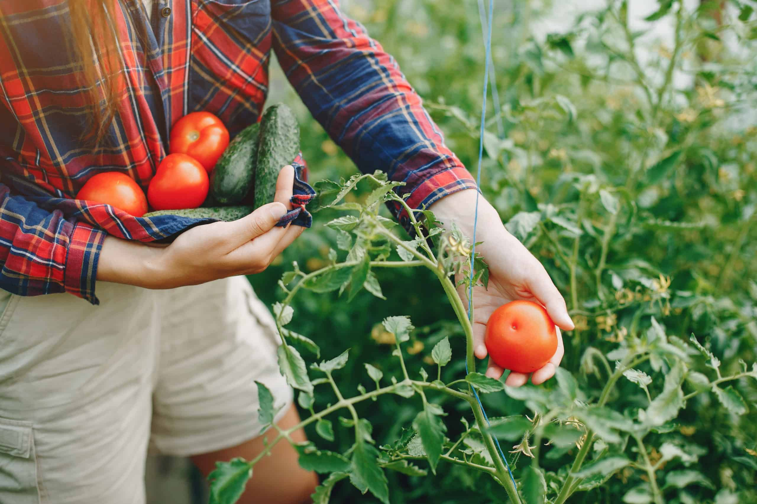 Gardening Is Good For Your Health: Reasons