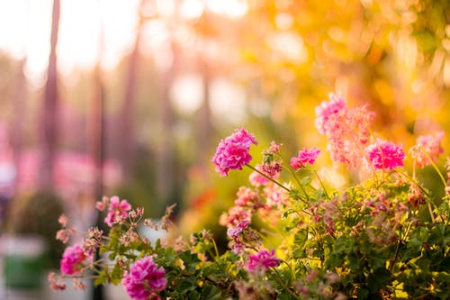 The Different Types Of Outdoor Gardens Will Be Helpful