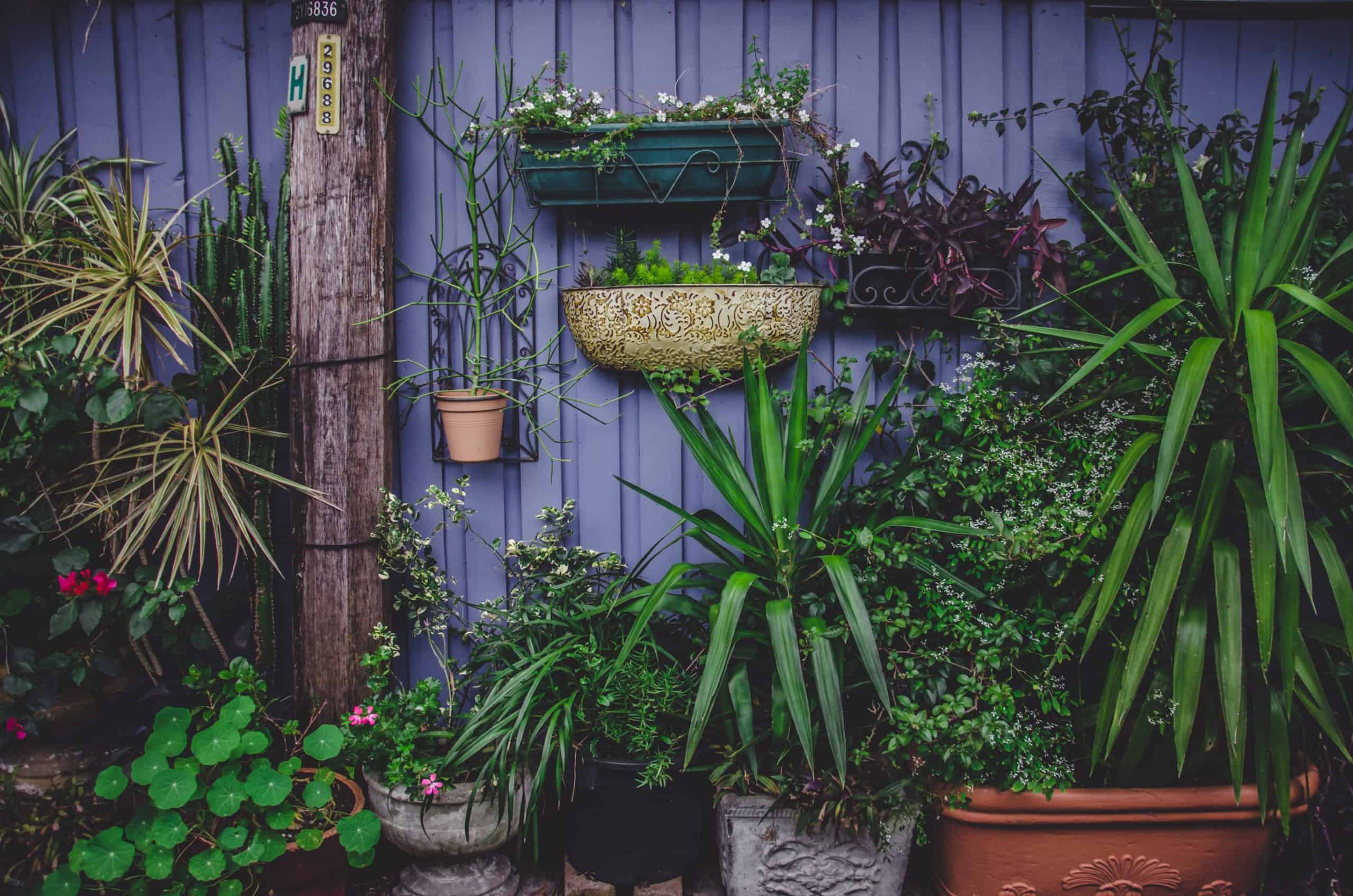 Useful Tools To Have A Clean Air In Your Garden