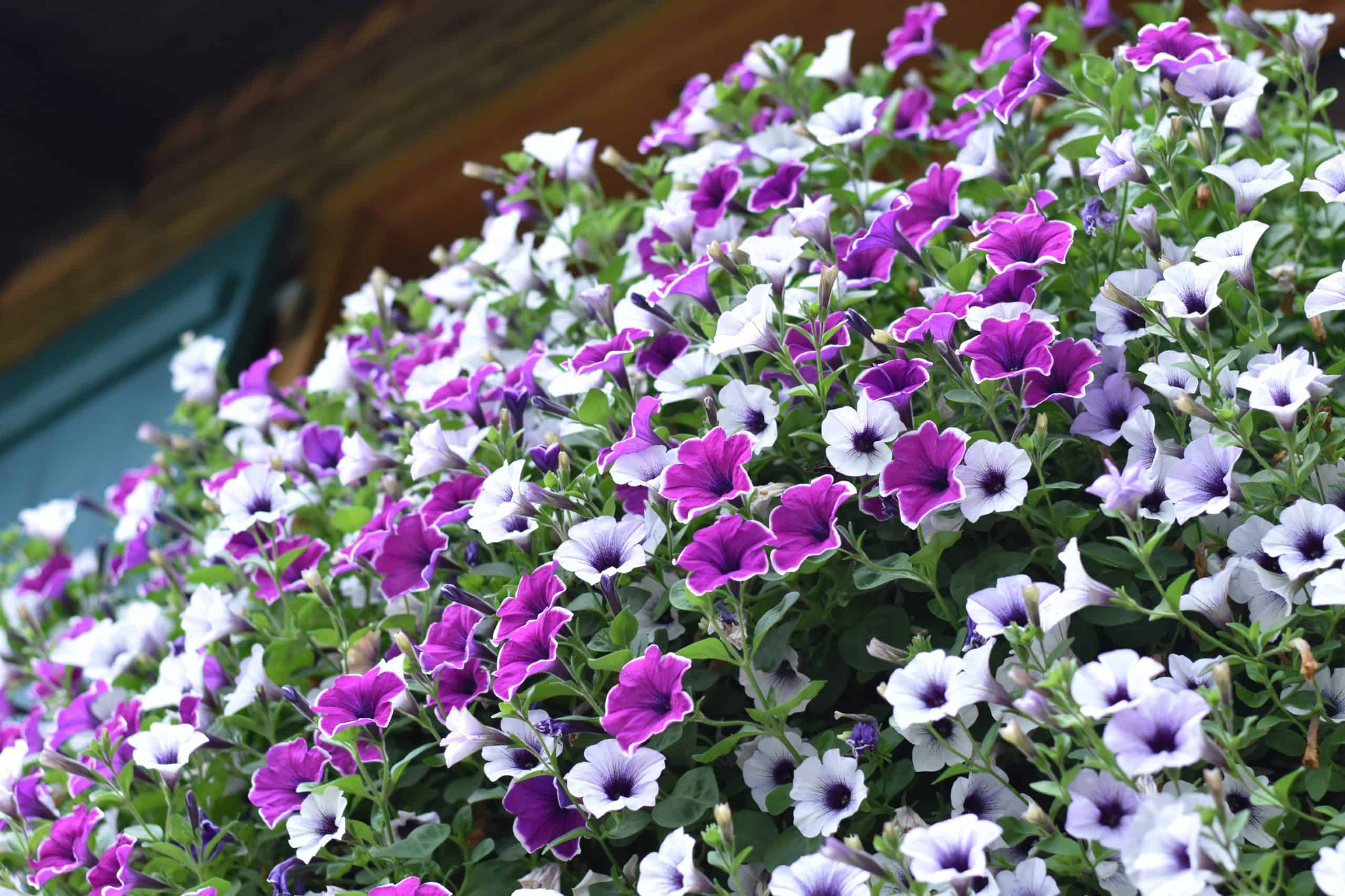 The Best Winter Bedding Plants For You
