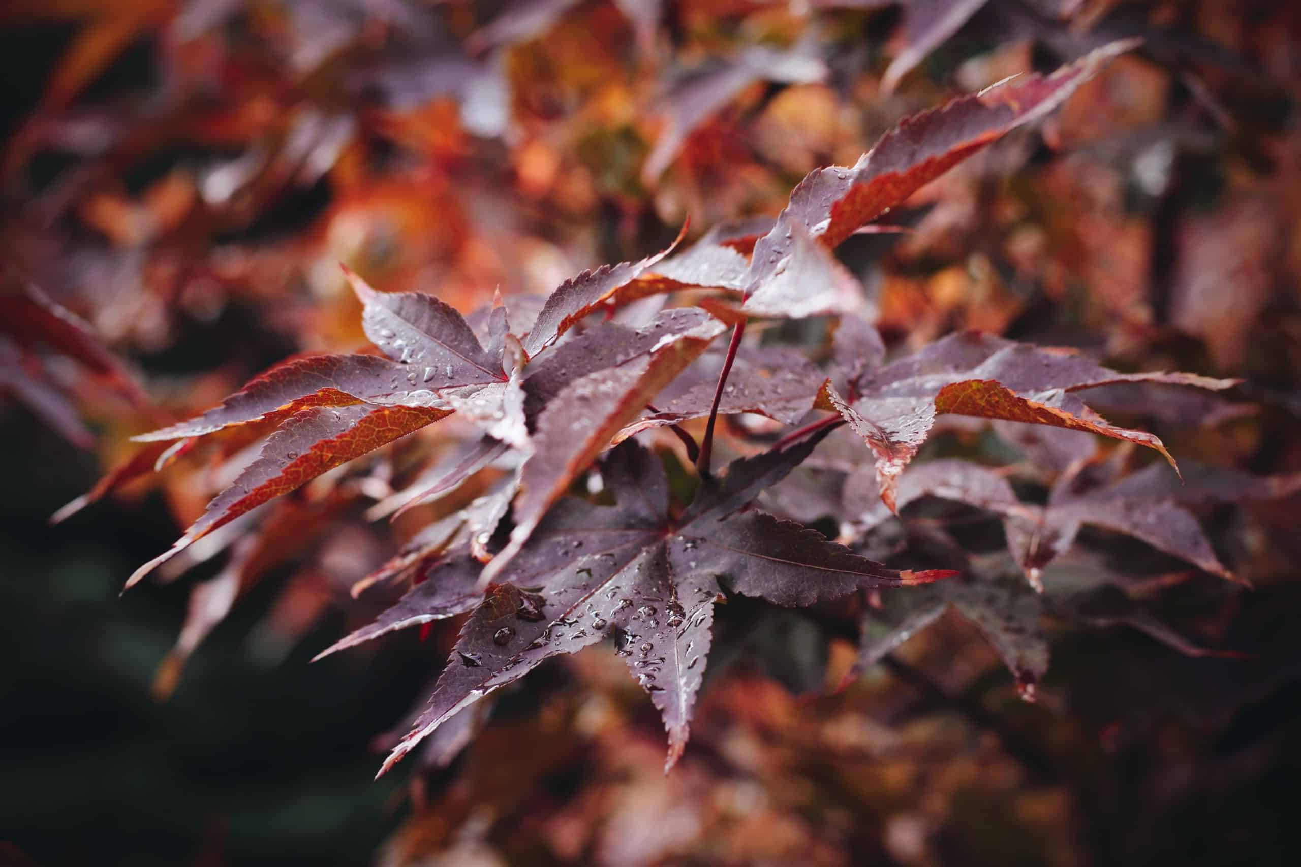 Water Sprinkle System: Can Keep Plants Fresh