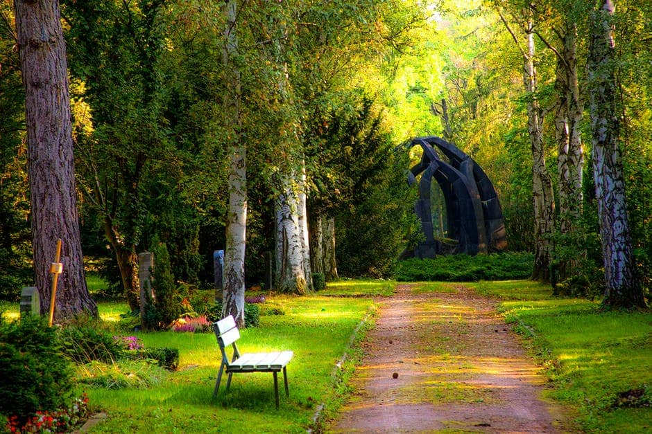 An empty park bench sitting in the middle of a lush green forest